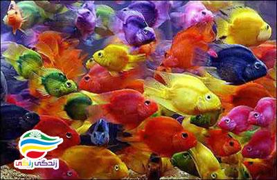 ماهی آب شیرین
