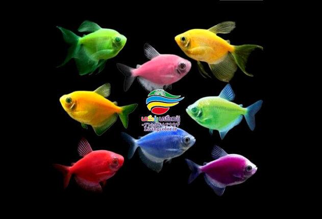 رنگارنگ ترین ماهی های آکواریوم