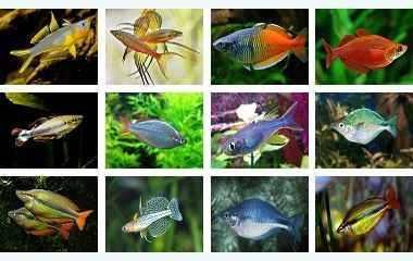 معرفی ماهیان رنگین کمان