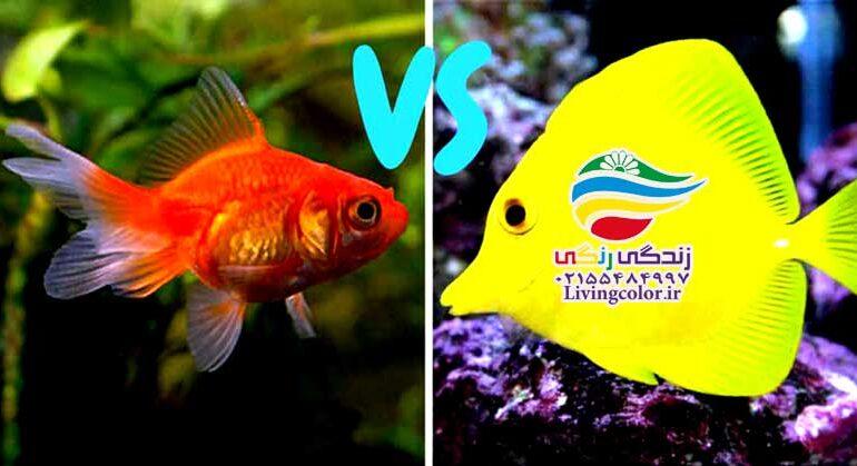 تفاوت ماهی آب شور و شیرین