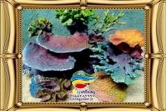 دکور-صخره-ای-آکواریوم-آب-شیرین-و-آب-شور-16