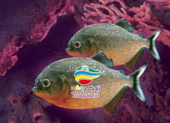 دانستنی های جالب در باره ماهی