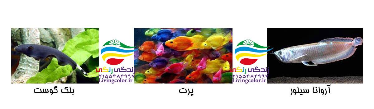 انتخاب ماهی برای آکواریوم