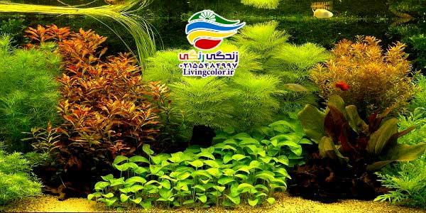 انواع آکواریوم گیاه