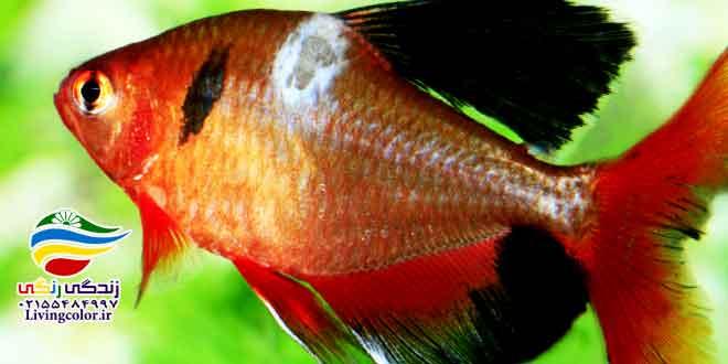 بیماری ماهی ها