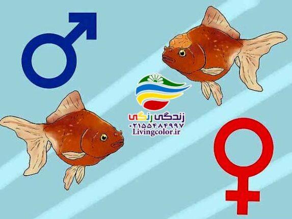 جنسیت در زندگی آبزیان