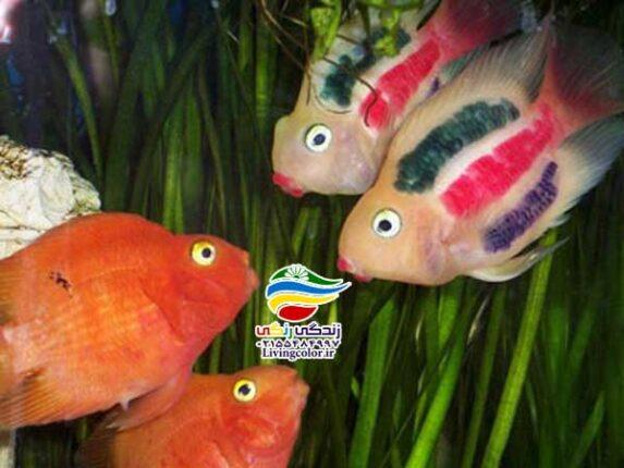 ماهی پرت یا طوطی ماهی